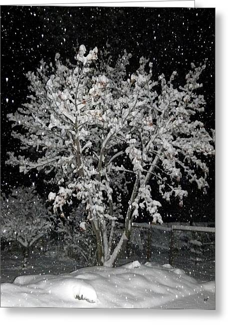 Striking Images Greeting Cards - Peaceful Snowfall Greeting Card by Will Borden
