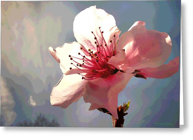 Fruit Tree Art Giclee Greeting Cards - Peach Blossom Macro 2 Greeting Card by Joyce Dickens