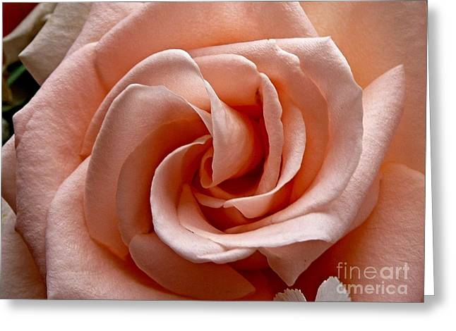 Sean Griffin Greeting Cards - Peach-Colored Rose Greeting Card by Sean Griffin