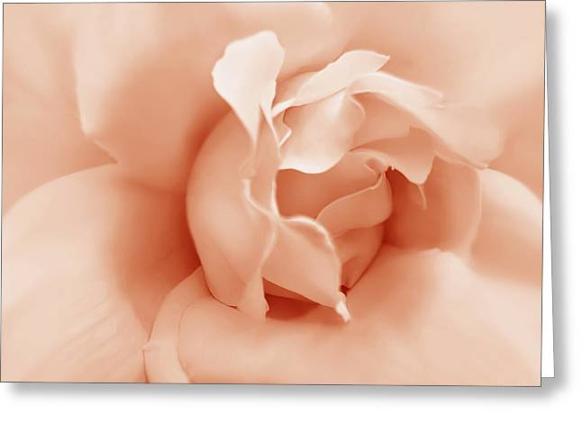 Peach Pastel Rose Flower Greeting Card by Jennie Marie Schell