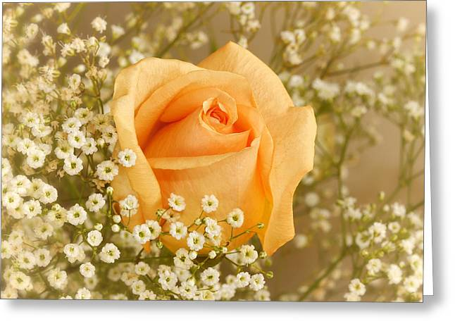 Peach Flower Greeting Cards - Peach Rose With Babys Breath Greeting Card by Tracie Kaska