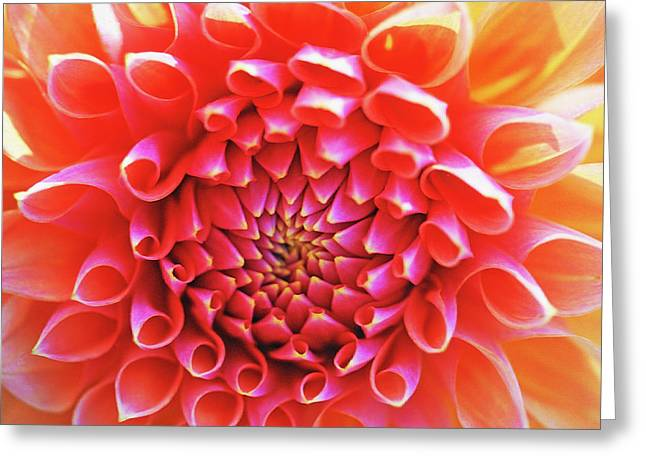 Close Up Framed Prints Greeting Cards - Peachy Dahlia Greeting Card by Kathy Yates