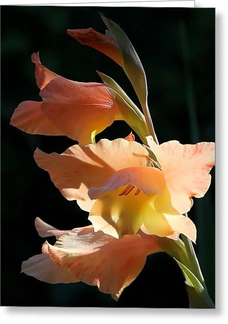 Gladiolas Greeting Cards - Peachy Gladiola Greeting Card by Angie Vogel