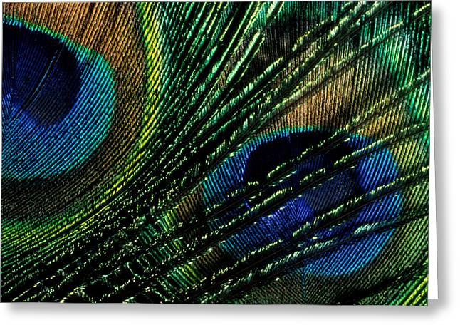 Jerry Mcelroy Greeting Cards - Peacock Eyes Greeting Card by Jerry McElroy