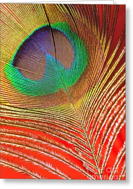 Converting Greeting Cards - Peacock Feather 2 Greeting Card by Kaye Menner
