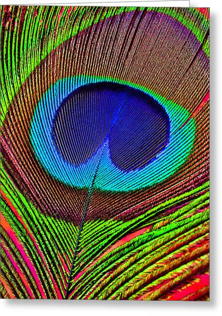 Peafowl Greeting Cards - Peacock Feather Close Up Greeting Card by Garry Gay