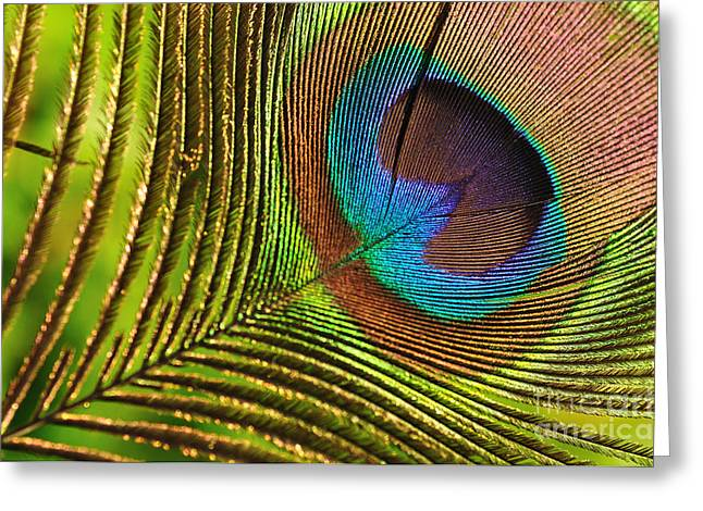 Converting Greeting Cards - Peacock Feather Greeting Card by Kaye Menner