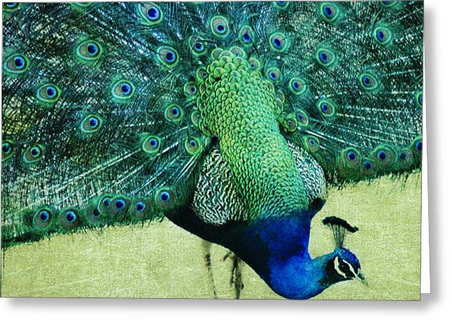 Blue And Green Greeting Cards - Peacock Pride Greeting Card by Linde Townsend
