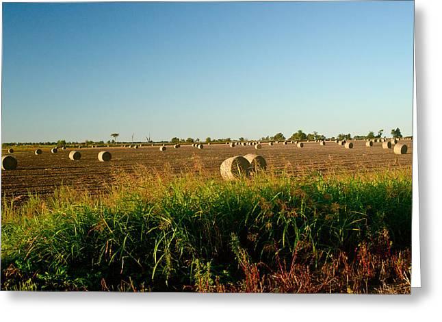 Peanut Bales In Field Greeting Card by Douglas Barnett
