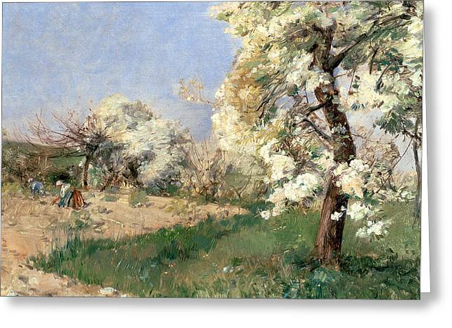 Pear Blossoms Greeting Card by Childe Hassam