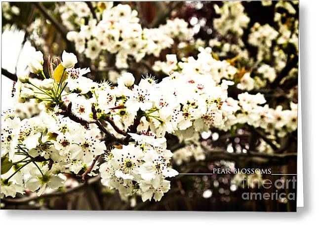 Steal Posters Greeting Cards - Pear Blossoms Greeting Card by James Serikov
