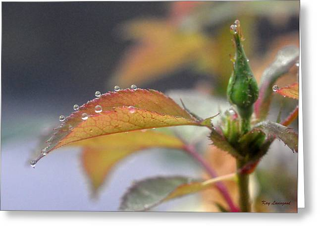 Kay Lovingood Greeting Cards - Pearls of Dew Greeting Card by Kay Lovingood