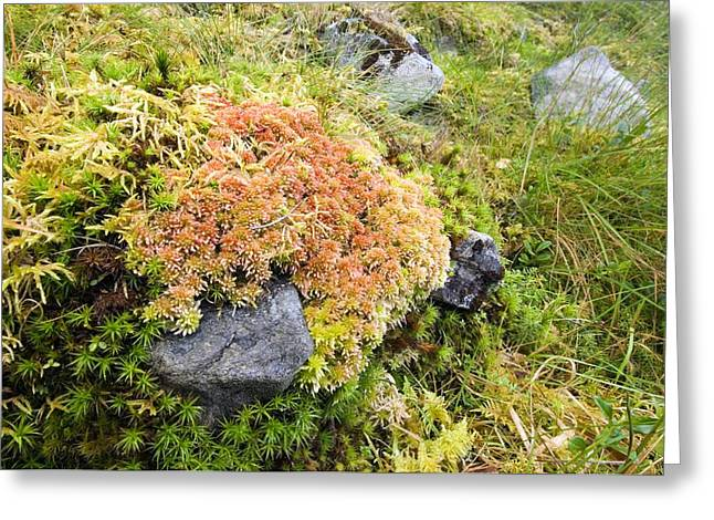 Peat Moss (sphagnum Sp.) Greeting Card by Duncan Shaw
