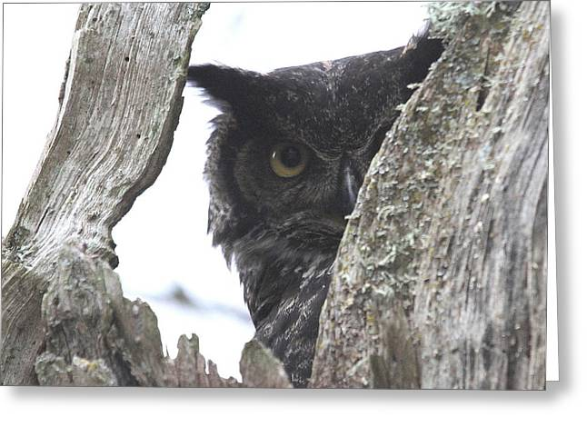 Wildlife Refuge. Greeting Cards - Peek-a-Boo Greeting Card by Angie Vogel