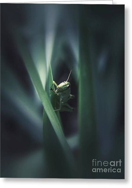 Christy Bruna Greeting Cards - Peek-A-Boo Greeting Card by Christy Bruna