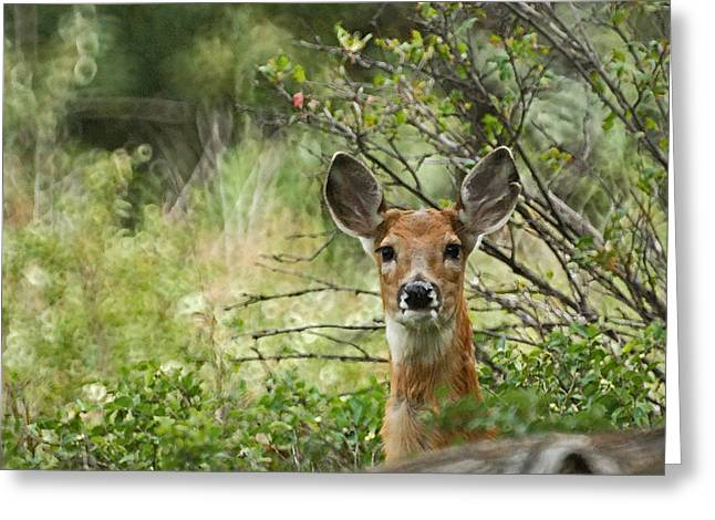 Fountain Creek Nature Center Greeting Cards - Peek A Boo Greeting Card by Ernie Echols