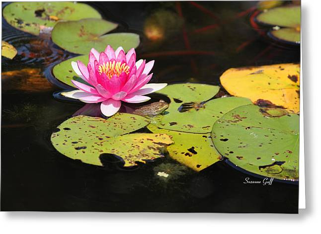 Water Garden Greeting Cards - Peek a Boo Frog Days Greeting Card by Suzanne Gaff