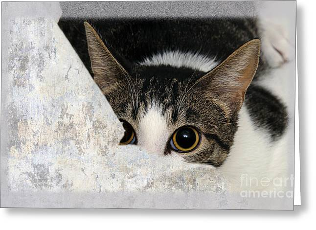 Peek A Boo I See You Too Greeting Card by Andee Design