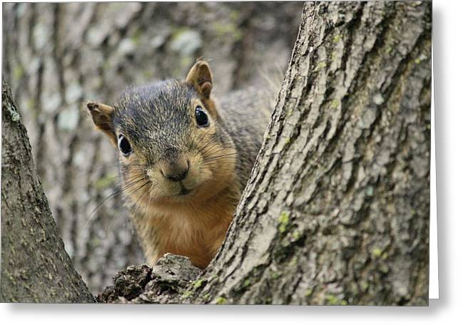 Peek A Boo Squirrel Greeting Card by Rosanne Jordan