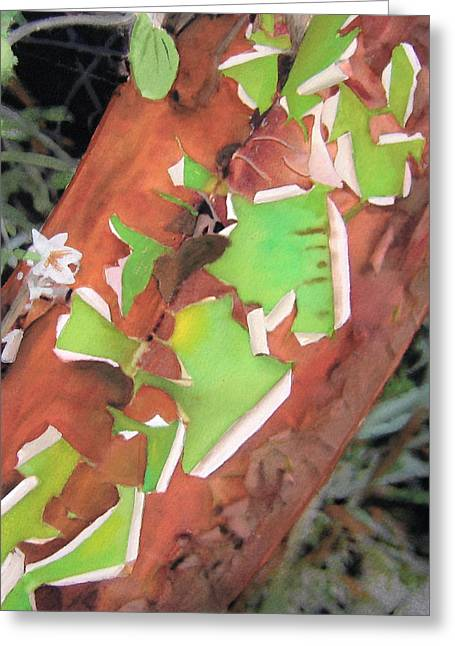 Robert Duvall Greeting Cards - Peeling Madrone Greeting Card by Robert Duvall
