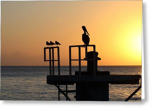 Key West Greeting Cards - Pelican and Friend Greeting Card by Rebecca Cozart