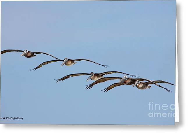 Pelican Crew In Flight Greeting Card by Barbara Bowen