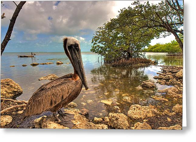 Best Sellers -  - Seabirds Greeting Cards - Pelican in the Florida Keys Greeting Card by William Wetmore