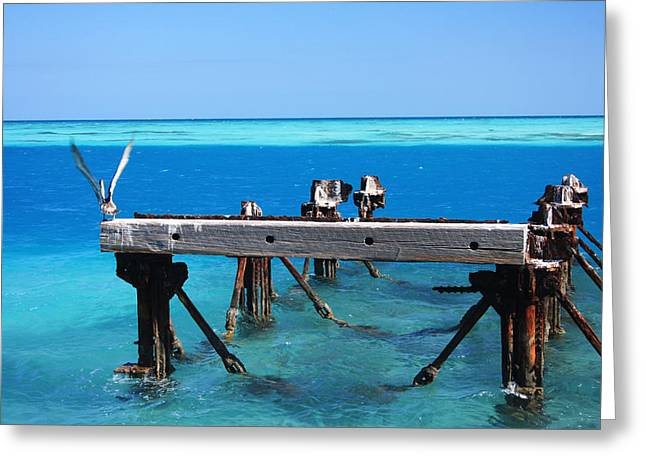 Dry Tortugas Greeting Cards - Pelican on the Pier Greeting Card by Irene K