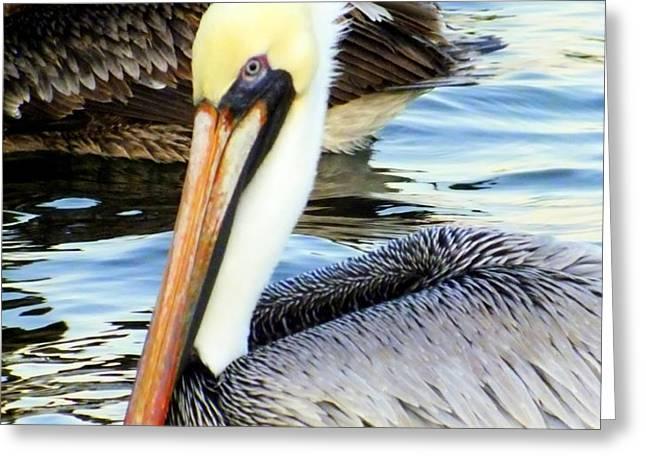 Pelican Pete Greeting Card by KAREN WILES