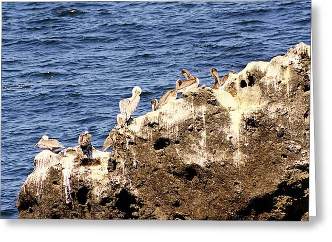 Pelican Rock Greeting Card by Chris Anderson