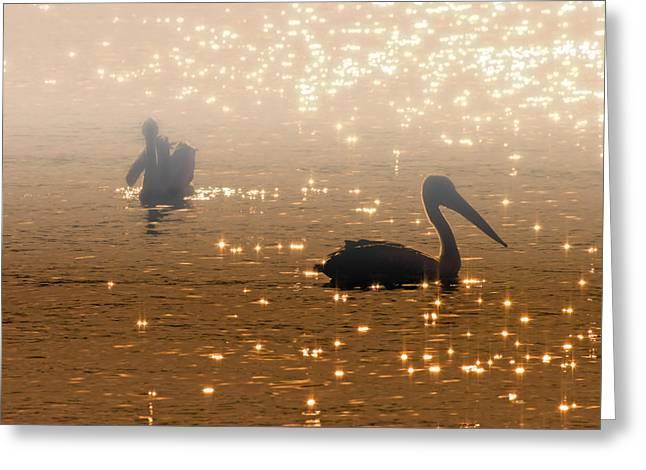 Fog Rising Greeting Cards - Pelican Sunrise Greeting Card by Mike  Dawson