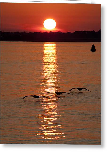 Bouys Greeting Cards - Pelican Sunset Greeting Card by Dustin K Ryan