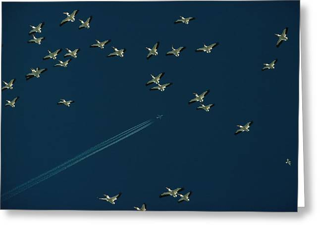 Pelicans And Jet Fly Above Great Salt Greeting Card by James L. Amos