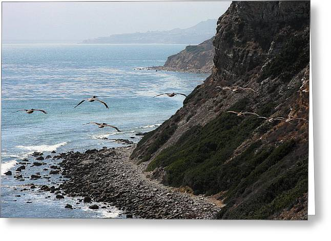 Pelicans Flying Over Water Greeting Cards - Pelicans colony flying over cliff Greeting Card by Viktor Savchenko