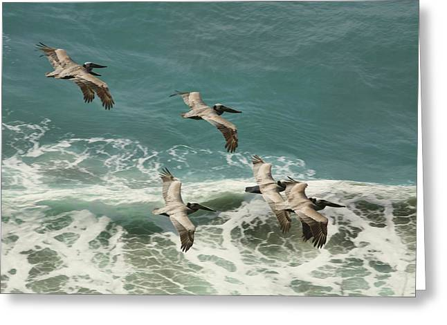 Big Sur Ca Greeting Cards - Pelicans in Flight over Surf Greeting Card by Gregory Scott