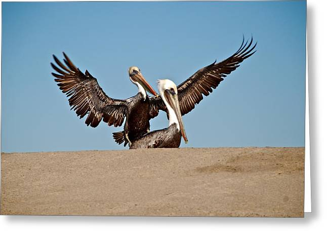 Pelicans Flying Greeting Cards - Pelicans Greeting Card by Liz Vernand