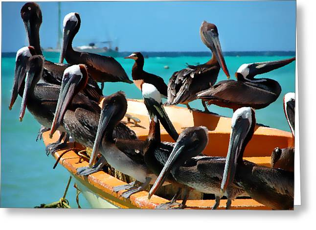 Pelican Greeting Cards - Pelicans on a boat Greeting Card by Bibi Romer