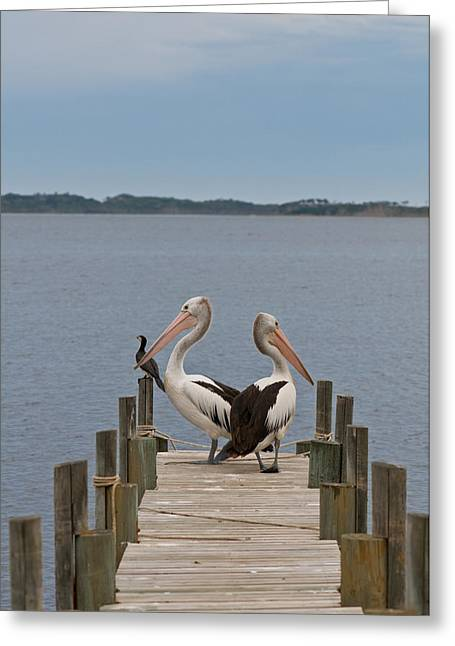 Pelicans On A Timber Landing Pier Mooring Greeting Card by Ulrich Schade