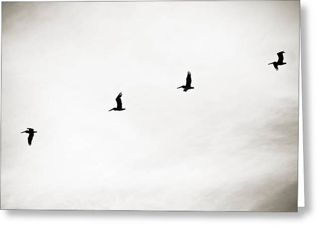 Flying Animal Greeting Cards - Pelicans on Parade Greeting Card by Marilyn Hunt