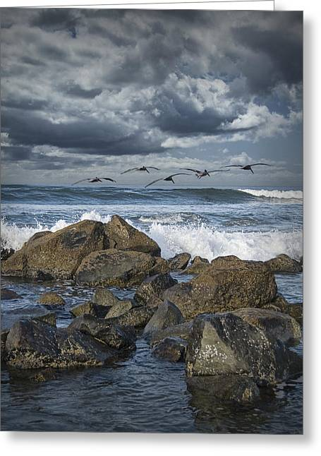 Randy Greeting Cards - Pelicans over the surf on Coronado Greeting Card by Randall Nyhof