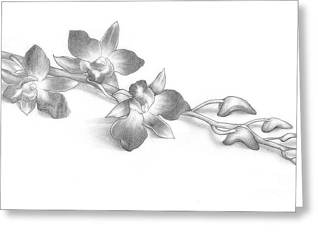 Graceful Drawings Greeting Cards - Pencil Drawing of Orchid Flowers Greeting Card by Evelyn Sichrovsky