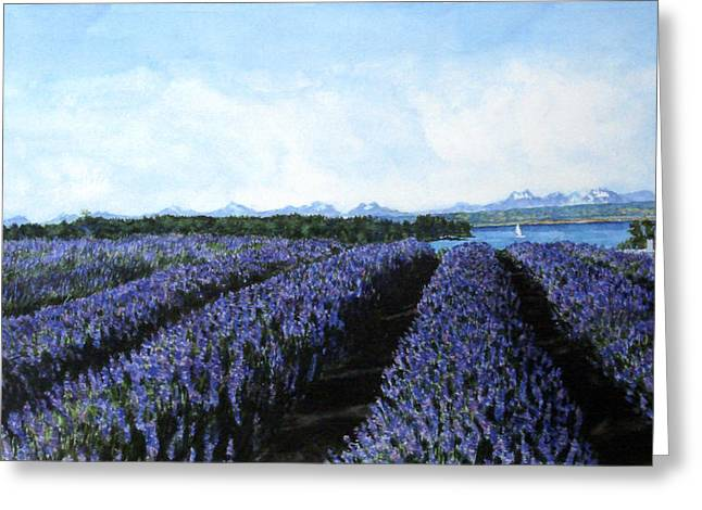 Penn Cove Greeting Cards - Penn Cove Lavender Greeting Card by Perry Woodfin
