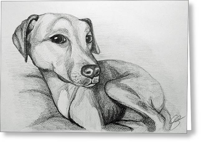 Puppies Drawings Greeting Cards - Penny Greeting Card by Sara Coolidge