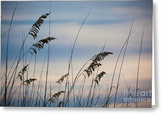 Pensacola Beach Sea Oats Greeting Card by Steven Gray