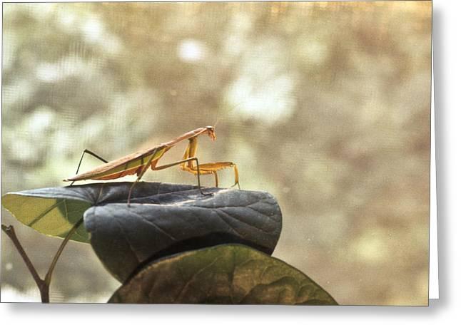 Preditor Photographs Greeting Cards - Pensive Mantis Greeting Card by Douglas Barnett