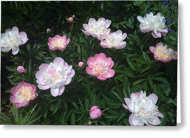 Bridge Of Flowers Greeting Cards - Peonies a la Monet Greeting Card by Martin Yaffee