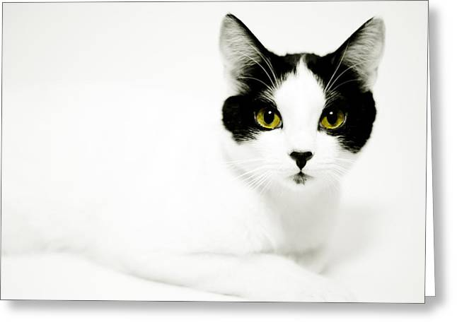 Housecats Greeting Cards - Pepper Greeting Card by Anthony Citro
