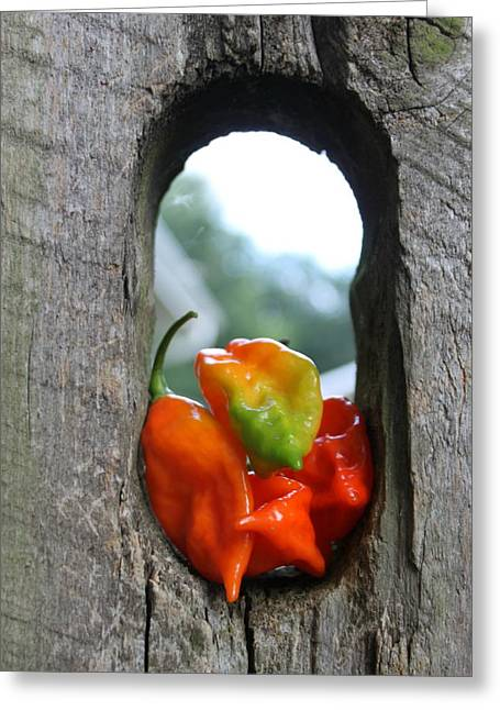 Hot Peppers Greeting Cards - Peppered Fence Greeting Card by Lauri Novak