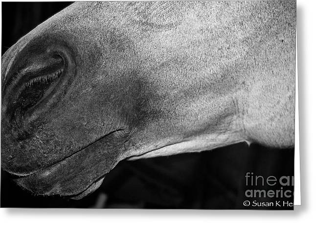 Gray Muzzle Greeting Cards - Peppermint Greeting Card by Susan Herber