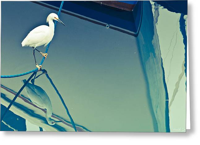 Photogaphy Greeting Cards - Perched Greeting Card by Heidi Smith